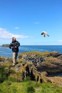 Carrick a rede bird fight ireland